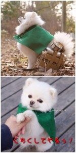 Pomeranian Shingeki Cosplay