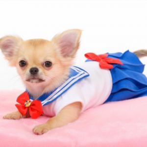 Sailor Moon Dog Costume